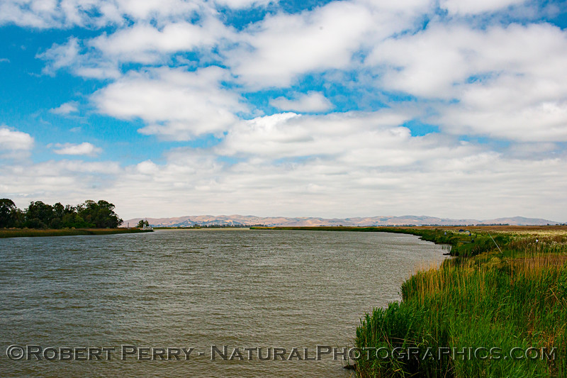 View from a bridge shows Delta water heading for San Francisco Bay...about 12 miles away as the egret flies.