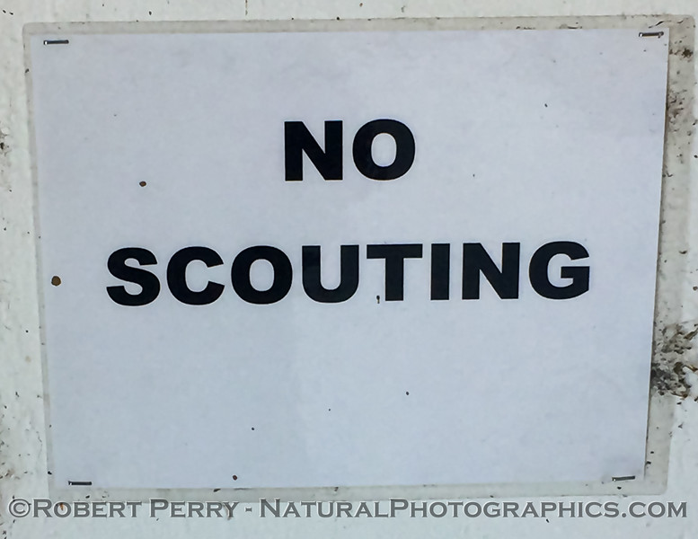 Scouting is a problem, evidently.