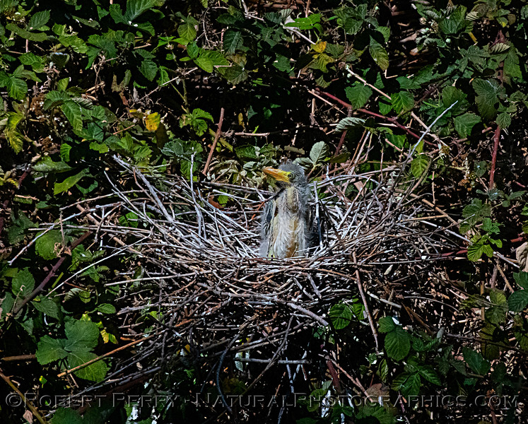 Chick in nest.