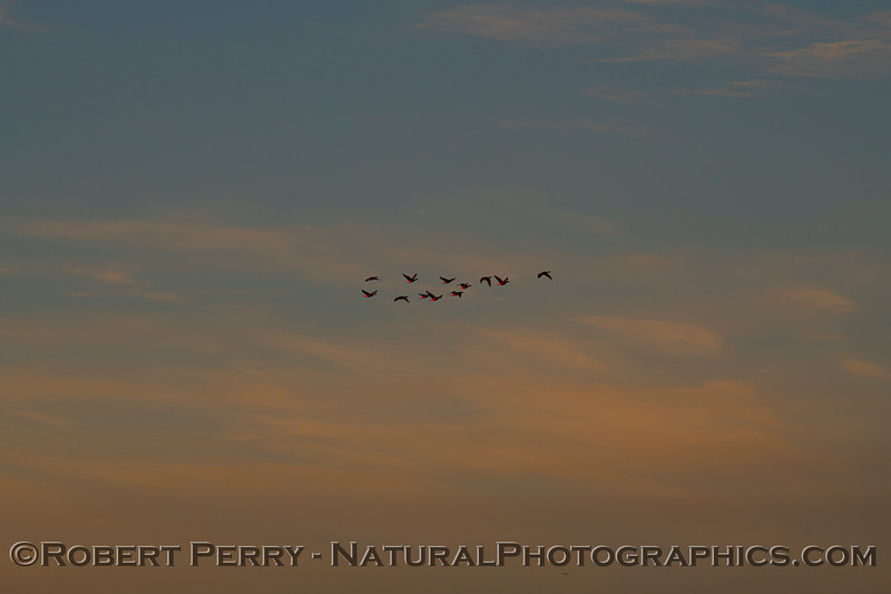 Sunrise BIG FILE 2020 12-10 Llano Seco-701
