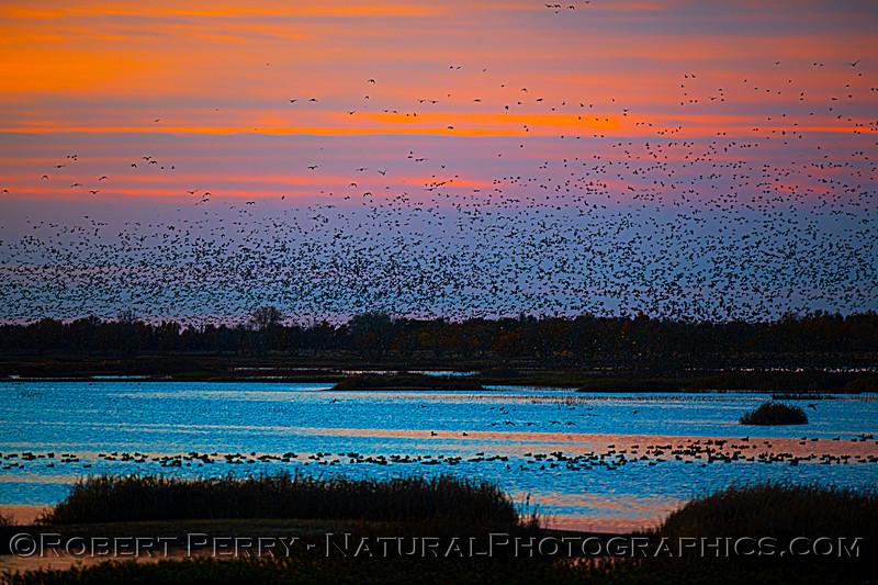 Sunrise 2020 12-10 Llano Seco-297