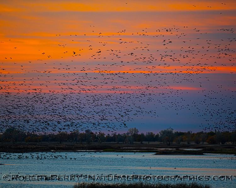 Sunrise 2020 12-10 Llano Seco-323