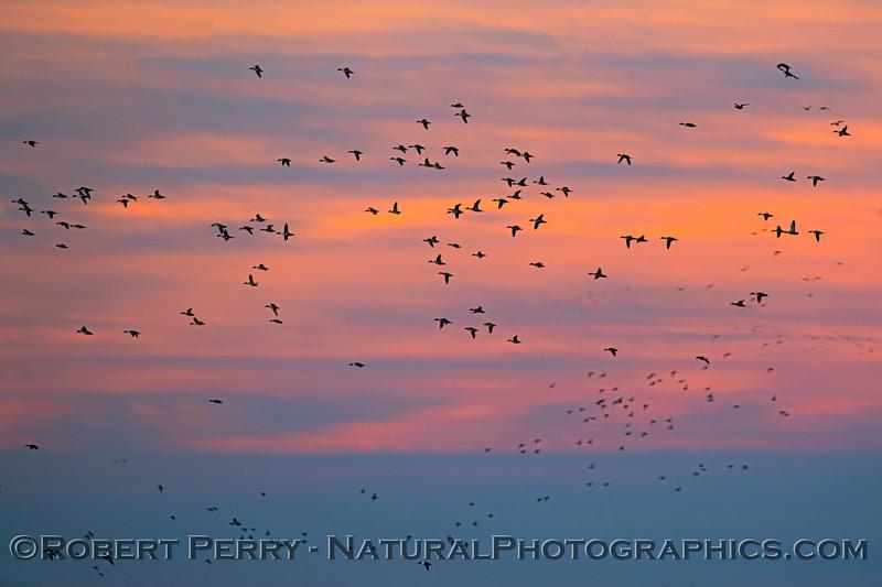 Sunrise 2020 12-10 Llano Seco-361