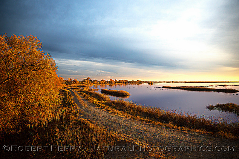 wetlands scenery Sunset 2020 12-09 Sac NWR-wide-b-025