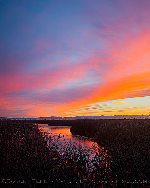 wetlands scenery Sunset 2020 12-09 Sac NWR-wide-y-101
