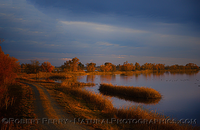 wetlands scenery Sunset 2020 12-09 Sac NWR-wide-b-005