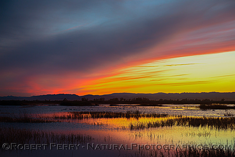 wetlands scenery Sunset 2020 12-09 Sac NWR-wide-y-194