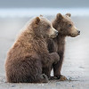 Lake Clark National Park Brown Bear Cubs