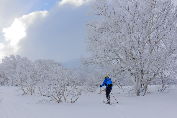 Skinning among the birches, Hokkaido, Japan