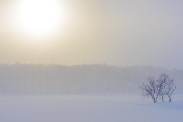 Birch trees in winter, Hokkaido, Japan