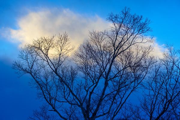 Birch tree branches, Hokkaido, Japan