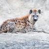 Lake Nakuru Hyena