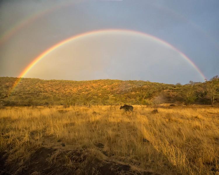 Lake Nakuru Rainbow over Cape Buffalo