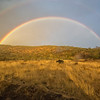 Lake Nakuru Rainbow over Cape Buffalo