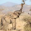 Samburu National Reserve Elephant