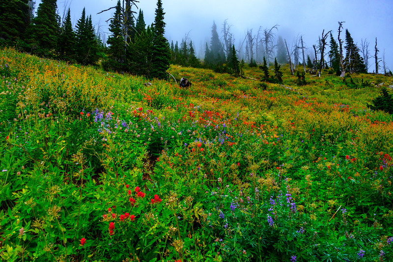 <br>The combination of burned forest and wildflowers added to the beauty (though the amount of torched forest in Idaho is staggering).