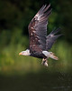 James River Eagle