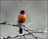 Robin4885_1274