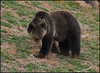 Grizzly5429_1999