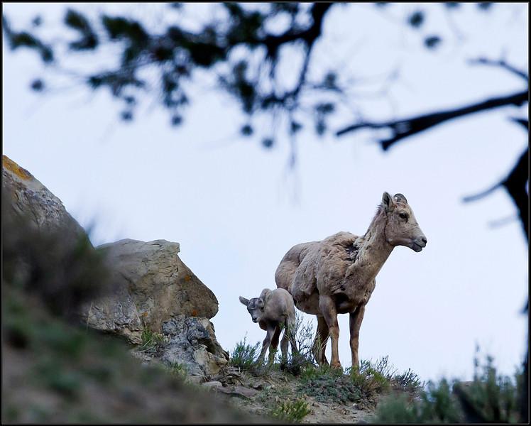 Lamb&Ewe4845_1659