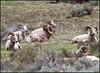 Rams5263_2230