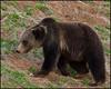 Griz5443_2010