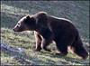 Grizzly5461_2030