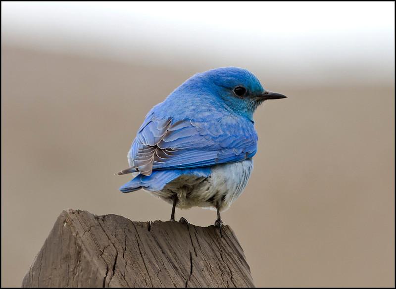 BlueBird5072_1445