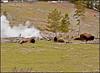 Steam&Bison3345