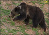Grizzly5437_2005