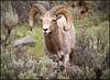 Ram5254_2222