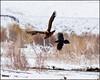Eagle&Raven6460_3480