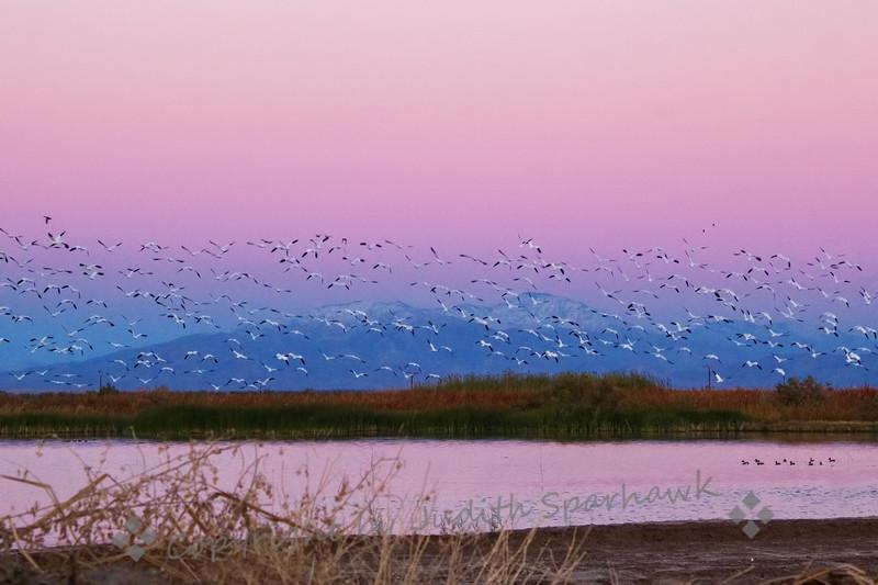 Dawn Flyout