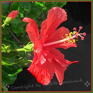 Really Really Red! - Judith Sparhawk