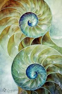 Nautilus Duo - Judith Sparhawk