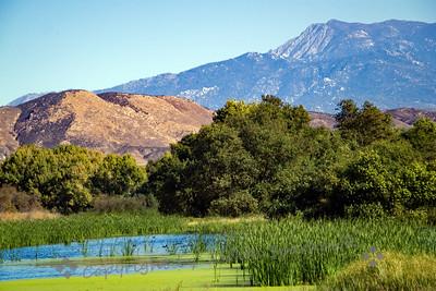 San Jacinto Wildlife Area - Judith Sparhawk