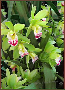 Orchids Galore! - Judith Sparhawk