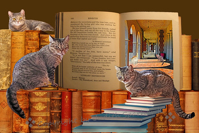 Cats & Books, Books & Cats