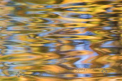 Reflections Gone Wild - Judith Sparhawk
