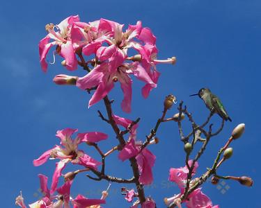 Silk Floss Tree & Visitor - Judith Sparhawk
