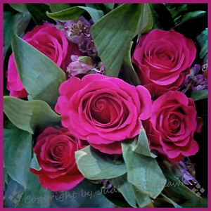 Roses! - Judith Sparhawk