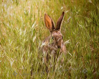 Hiding Out 'Til Easter! - Judith Sparhawk