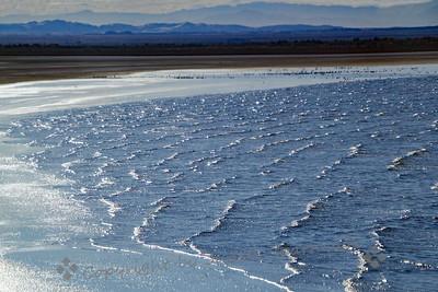 The Edge of the Sea - Judith Sparhawk