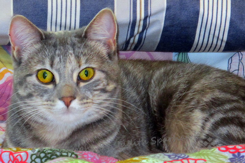 Minerva With the Golden Eyes
