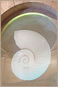 The Nautilus Shell - Judith Sparhawk
