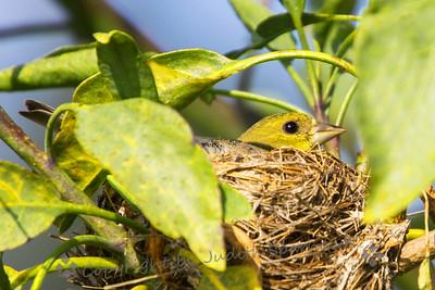 Nesting Time - Judith Sparhawk