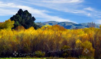 San Timoteo Canyon Winter