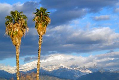 Sentinel Palms