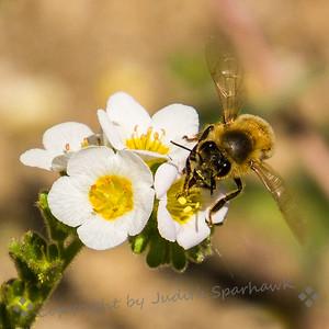 Busy Busy Bee - Judith Sparhawk