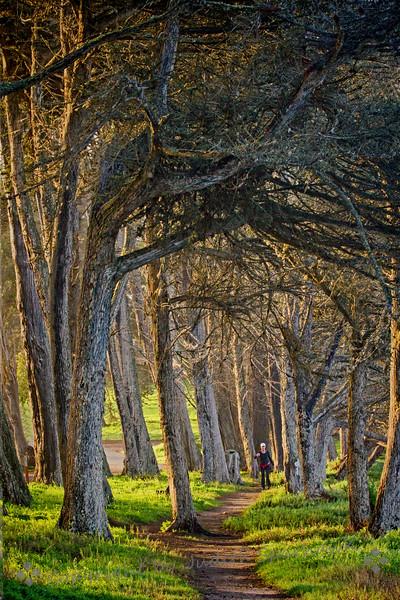 Walker on the Trail